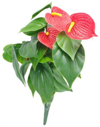 Red Anthurium Bunch Uv