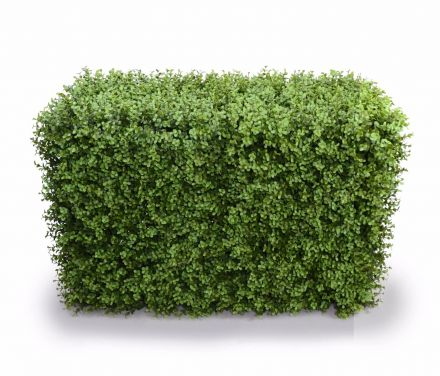 Deluxe Portable Buxus Hedges Uv Stabilised 100cm Long X 55cm High