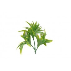 Dracaena (yucca) Stem Uv