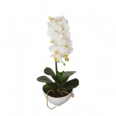 46cm Butterfly Orchid - White